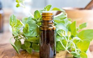 Aromatični origano –  začimba, ki zdravi