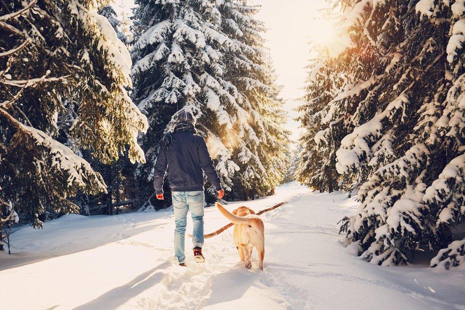 sprehod-gozd-zima