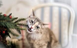 Ideje, kako lahko za božič okrasite stanovanje, če imate doma mačko ali psa