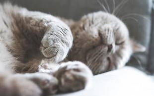 Dovolite vaši mački spati z vami v postelji? Poglejte, kakšne posledice ima lahko to za vas in vašega ljubljenčka!