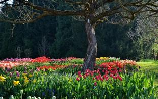 Ideja za izlet: Na sprehod med tulipane v Volčji Potok