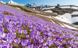 Ideja za izlet: Vijolično obarvana Velika planina