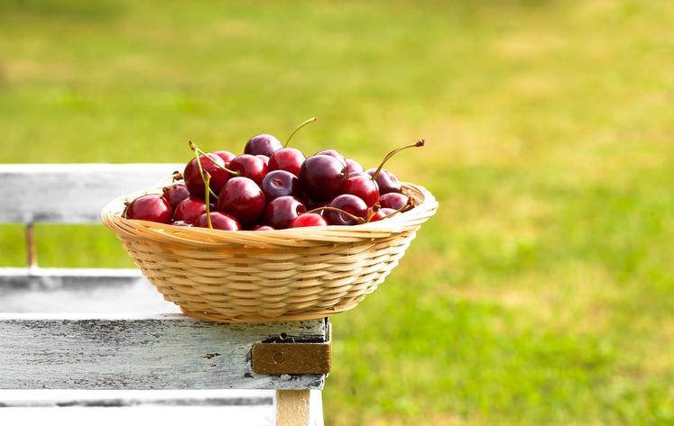 ČEŠNJE Ne zavrnite češenj s prijateljevega drevesa! Vsebujejo namreč veliko antioksidantov, ki pomagajo pri odstranjevanju odpadnih snovi iz telesa - …