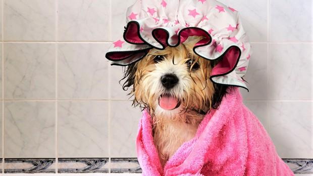 7 trikov, kako še lahko uporabite kapo za prhanje (foto: Profimedia)