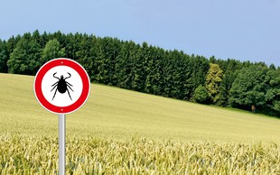 Nevarnost, da se bolezni nalezemo od klopa, obstaja že, ko nam v ranico vrne del že prebavljene 'hrane'