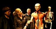 Na razstavi so prikazana celotna telesa, posamezni deli, prerezi in organi.