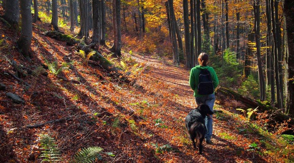 sprehod-s-psom-gozd-jesen