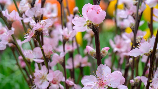 Japonski vrtovi (foto: Profimedia)