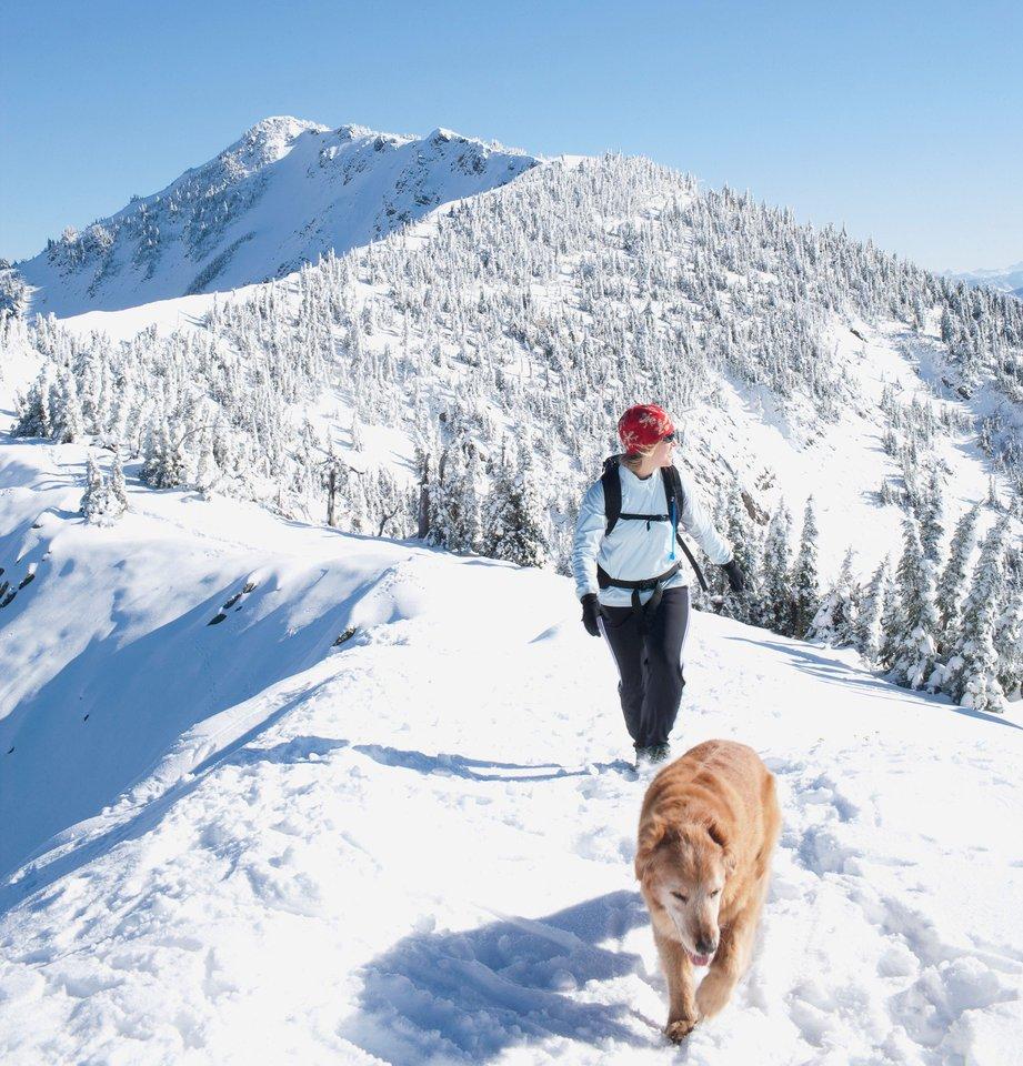treking-zima-pes_CFddBNm