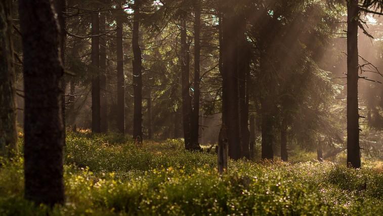 Lekcija, ki se je lahko naučite v gozdu (foto: unsplash)