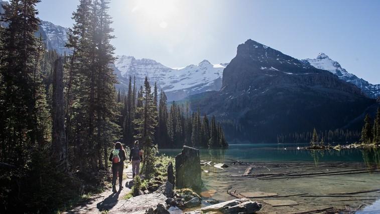Najboljši razlogi za to, da se odpravite v gore (ste že bili v Alpskem živalskem vrtu?) (foto: profimedia)