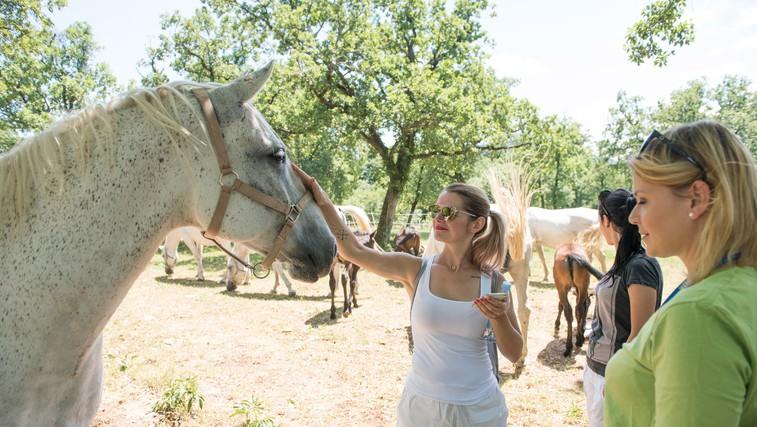 Posebno doživetje: Dan za velike in majhne mojstre barvanja in piknik v Lipici (foto: Kobilarna Lipica)