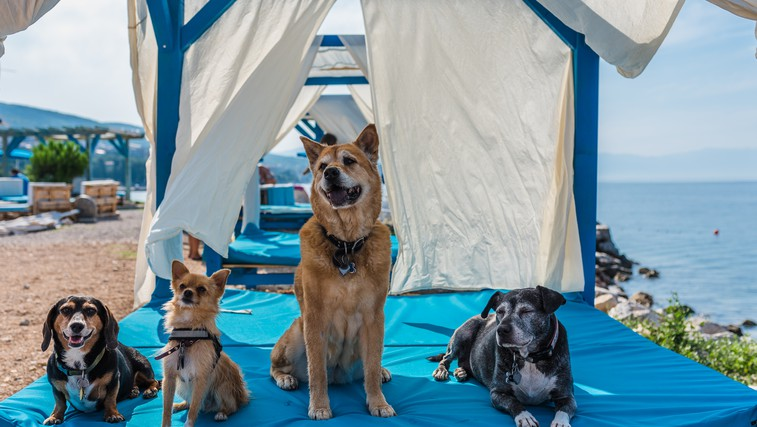 Crikvenica: idealna počitniška destinacija za vas in za vašega psa! (foto: Crikvenica Tourist Board)