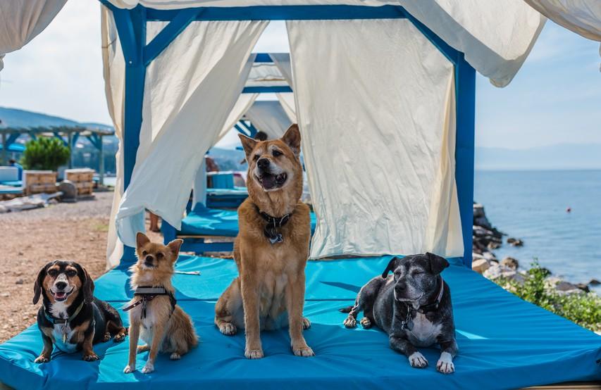 Crikvenica: idealna počitniška destinacija za vas in za vašega psa!
