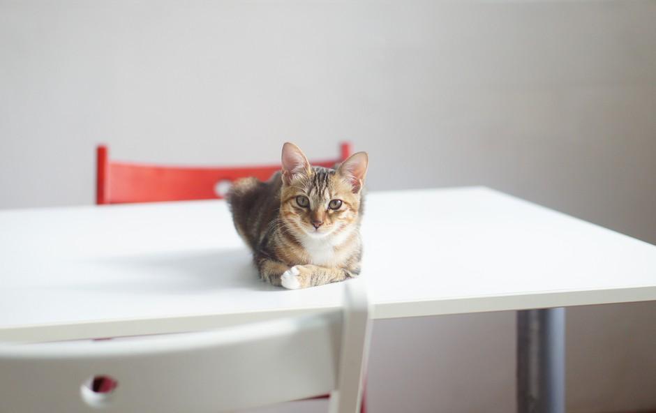 6 dobrih učinkov življenja z mačko (foto: unsplash)
