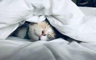 Tisti, ki imate doma mačko, ste srečneži!