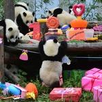 Tole pa je srčkano – rojstnodnevna zabava za pande (foto: Profimedia)