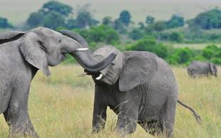 Sloni so vitalni za naš planet