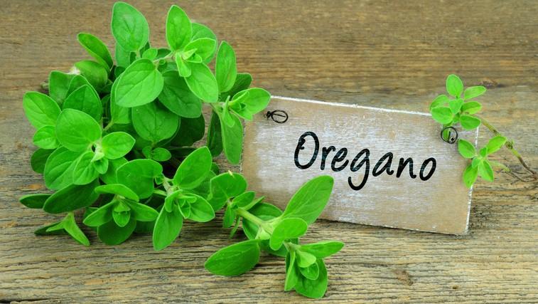 Origano – aromatična začimba z bogatimi zdravilnimi učinki (foto: Profimedia)