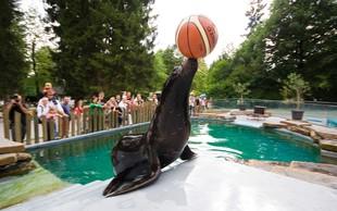 Morska leva Kalle in Jip uživata v obnovljenem bazenu