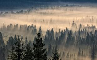 Ideja za izlet: med krošnje na Pohorje