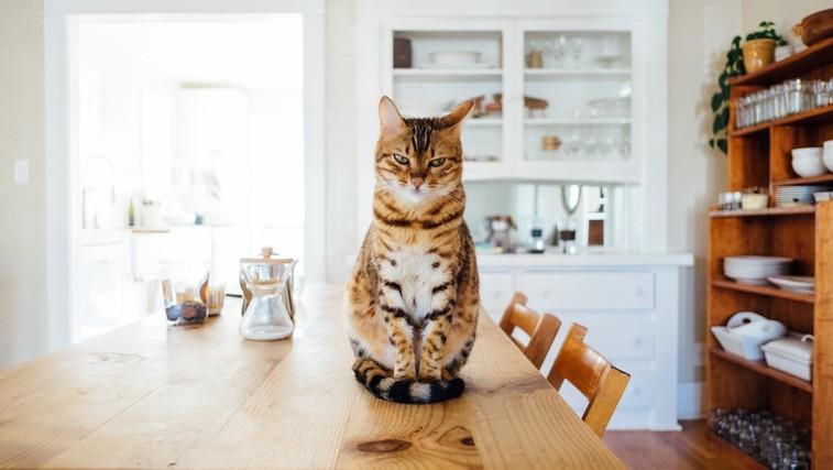 Tisti, ki imate doma mačko, ste srečneži! (foto: unsplash)