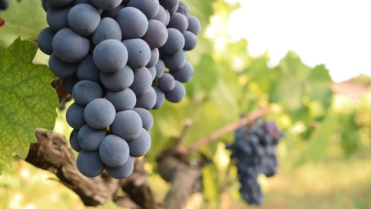 Spoznajte zdravilne lastnosti grozdja in preizkusite recept - piščanec z grozdjem (foto: Profimedia)