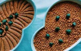 Recept za jesenske dni: Veganski tatarski biftek