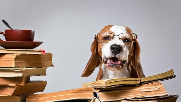 7 najbolj pametnih pasem psov po oceni strokovnjakov (foto: profimedia)