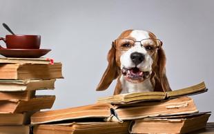 7 najbolj pametnih pasem psov po oceni strokovnjakov