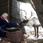 Pleme, ki jezdi severne jelene (foto: profimedia)