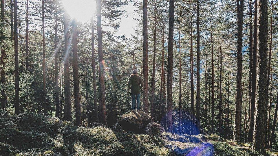 sprehod-gozd-avstrija
