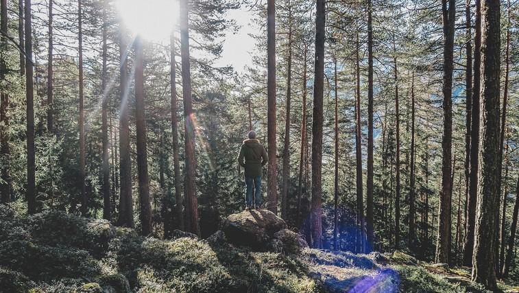 11 stvari, ki se jih od dreves lahko naučimo o življenju (foto: Paul Gilmore | Unsplash)