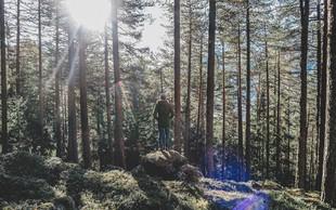 11 stvari, ki se jih od dreves lahko naučimo o življenju