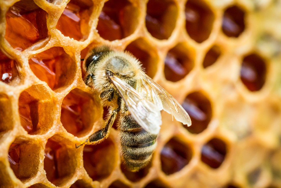 Ob dnevu prihodnosti bodo postavili 4 učne čebelnjake (poznate pomen čebel za našo prihodnost?) (foto: SHUTTERSTOCK)