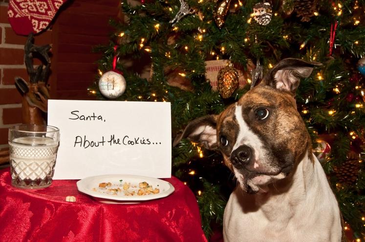 Piškoti za Božička čudežno izginejo ... Pa naj še kdo reče, da se čudeži ne dogajajo.