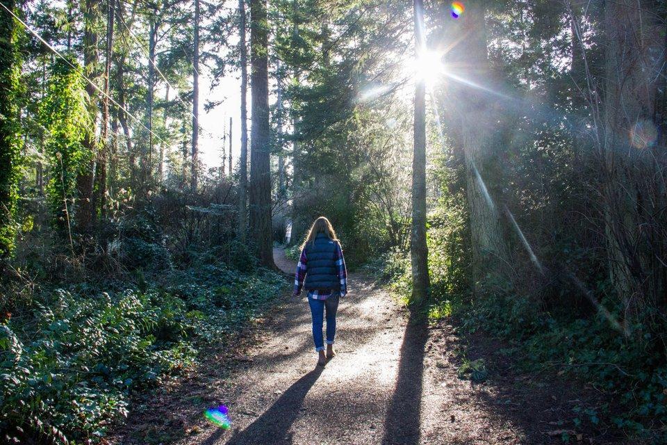 sprehod-po-gozdu-0281722074