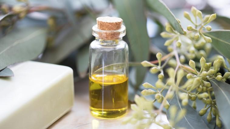 Kako uporabljati evkaliptusovo olje? (in zakaj mora vedno biti v vaši omarici) (foto: profimedia)