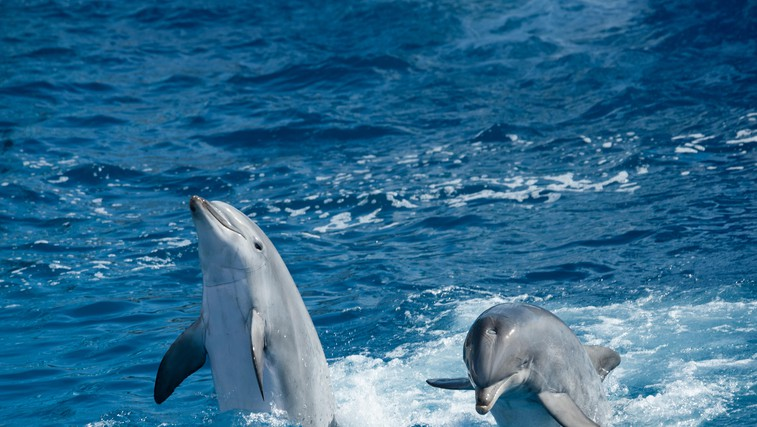 Zakaj moramo skrbeti za oceane in morja? (foto: profimedia)