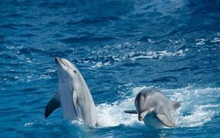 Zakaj moramo skrbeti za oceane in morja?