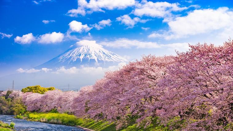 Ideja za virtualni izlet: Hanami – japonsko praznovanje cvetočih češenj (foto: profimedia)