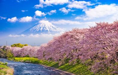 Ideja za virtualni izlet: Hanami – japonsko praznovanje cvetočih češenj