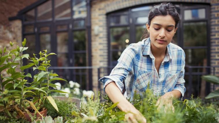 Vrtnarjenje je super zdravo: zmanjša stres, ščiti pred osteoporozo, kuri odvečne maščobe ... (foto: profimedia)