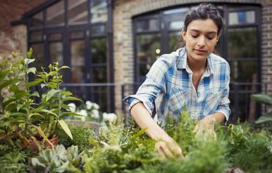 Vrtnarjenje je super zdravo: zmanjša stres, ščiti pred osteoporozo, kuri odvečne maščobe ...