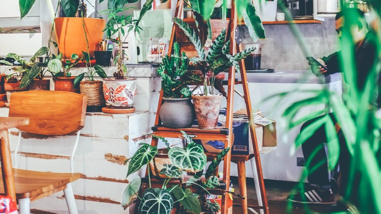 Srečni smo lahko, da imamo v vsem tem kaosu doma rastline (foto: unsplash)