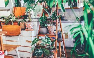 Srečni smo lahko, da imamo v vsem tem kaosu doma rastline