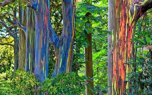 Narava je prava umetnica: koze na drevesu, mavrična drevesa, pravljični slapovi in  pikčasta jezera