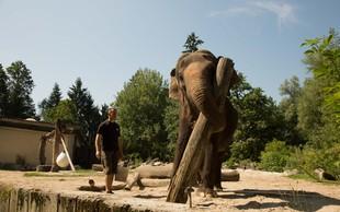 Zakaj ''hodijo v šolo'' tudi živali? Največja učenka - slonica Ganga - je odličnjakinja