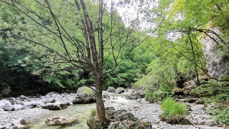 Pobeg iz mesta po svežo zalogo kisika in sprehod po naravi: soteska Iški vintgar (foto: DDD)