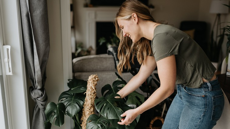Rastline, ki po feng šuju prinašajo največ sreče in zdravja (foto: Profimedia)